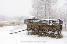 "Photographer: Thomas Mangelsen's photograph titled ""A Time Forgotten - Memories of Shane"" (old wood wagon in the snow - winter)"