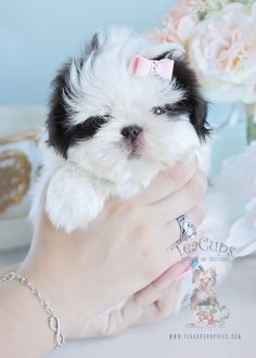 Shih Tzu Puppy For Sale Teacups Puppies 205