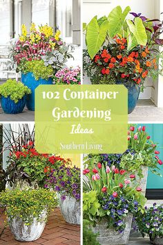 102 Container Gardening Ideas | Enjoy nonstop color all season long with these container gardening ideas and plant suggestions. You'll find beautiful pots to adorn porches and patios.
