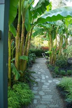 Landscaping Trees, Tropical Landscaping, Modern Landscaping, Front Yard Landscaping, Tropical Gardens, Modern Landscape Design, Landscape Plans, Garden Trees, Garden Paths