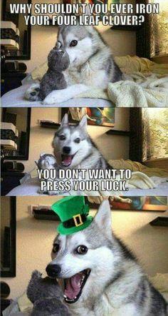 New memes funny jokes mom 56 ideas Funny Husky Meme, Funny Dog Jokes, Stupid Funny Memes, Mom Funny, Dad Jokes, Hilarious, Animal Jokes, Funny Animal Memes, Funny Animals