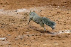 rally squirrel!!