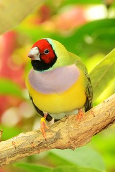 Colorful Bird by Texy's Photography