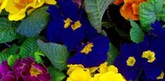 Most Fragrant Flowers According to Gardeners