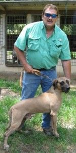 50+ Best The Black Mouth Cur and Plott Hounds images ...