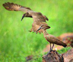 Birds, The Originals, Animals, Animales, Animaux, Bird, Animal Memes, Animal, Animais