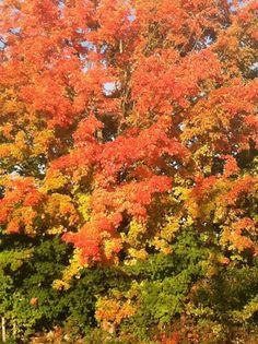 first fall walk of 2013