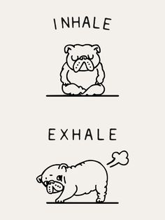Inhale Exhale English Bulldog Graphic Hoodie by Huebucket - Unisex Zip White - LARGE - Front Print - Zip Funny Dogs, Cute Dogs, Funny Animals, Cute Animals, Animals Dog, Cãezinhos Bulldog, Bulldog Puppies, Funny Bulldog, Bulldog Quotes