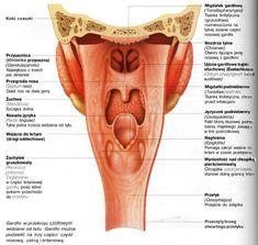 Ból gardła - co oznacza, jak leczyć? - Człowiek i zdrowie Tattoos, Anatomy, Speech Language Therapy, Tatuajes, Tattoo, Tattos, Tattoo Designs, Artistic Anatomy
