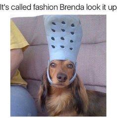 Funny Dogs Memes Just 33 Hilarious Pet Memes - Funny Animal Jokes, Funny Dog Memes, Pet Memes, Funny Animal Pictures, Cute Funny Animals, Animal Memes, Cute Baby Animals, Funny Cute, Funny Dogs