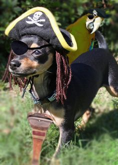 Pirate puppy and parrot. This website has all kinds of adorable pictures of costumed dogs!