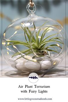 Hanging Glass Globe with Air Plant and Fairy Lights