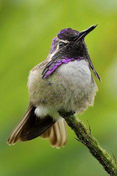 ♦∞♦∞♦∞♦∞♦∞♦ Bird ♦∞♦∞♦∞♦∞♦∞♦
