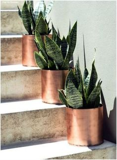 This indoor plant requires little maintenance + cleans the air your breathing. the client did mention she didn't have a preference to if they we're fake or Organic Horticulture, Organic Gardening, Gardening Tips, Indoor Gardening, Hydroponic Gardening, Copper Planters, Planter Pots, Copper Pots, Planter Ideas