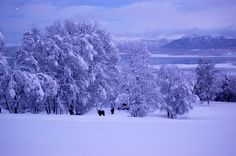 Holemark Farm, Håkøybotn, Troms, Norway Pennsylvania Dutch, Norway, Scandinavian, Cool Photos, Snow, Seasons, Country, Winter, Outdoor