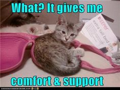 What? It gives me comfort and support.  Had to re-pin because one of my cats does this all the time!  We tease him for liking women's lingerie  :)