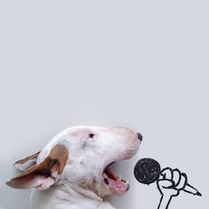 Karaoke Bull Terrier