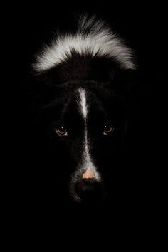 "Click visit site and Check out Best ""Border Collie"" T-shirts. This website is excellent. Tip: You can search ""your name"" or ""your favorite shirts"" at search bar on the top. #bordercollie"