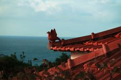 Madeira with roofgards/birds