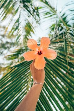 Art hoe aesthetic, insta photo ideas, tropical paradise, beach day, metal b Art Hoe Aesthetic, Beach Aesthetic, Summer Aesthetic, Tropical Vibes, Tropical Paradise, Photo Wall Collage, Picture Wall, Cute Wallpapers, Wallpaper Backgrounds
