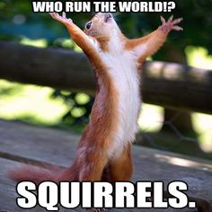 #Beyonce #squirrel.... This made me snicker.