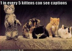 funny pictures - one in every five kittens can see captions