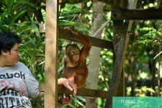 So many reasons to visit beautiful, wild Borneo.