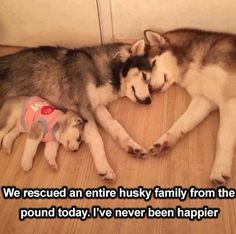 Omg that's so cute *not mine* *not my dogs*
