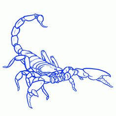 How to draw a scorpian
