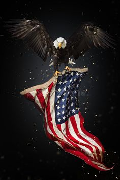 Illustration about North American Bald Eagle flying with American flag. Freedom and democratic concept. Illustration of eagle, fourth, patriot - 118764982 American Flag Wallpaper, American Flag Eagle, American Flag Tattoos, Patriotic Pictures, Eagle Pictures, American Flag Pictures, I Love America, God Bless America, Pray For America