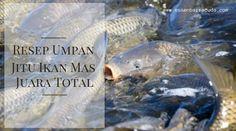 Resep Umpan Jitu Ikan Mas Juara Total Fish Pet Fish Pets