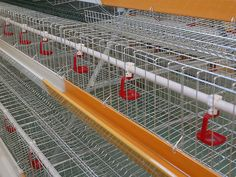 Our Company as a A Type Layer Chicken Cages supplier & Manufacturer in china, if you need that pls contact us.