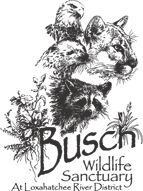 Busch Wildlife Sanctuary, BuschWildlife.org - don't miss the opportunity to get really close to wild animals (skunks, baby alligators, etc.); great fun for children and adults