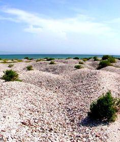 Cementerio de conchas marinas en la   isla de Coche. Margarita Venezuela