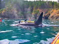 sea kayak with orcas