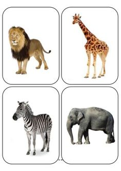 Animales de la Selva Toddler Learning Activities, Montessori Toddler, Montessori Activities, Animal Pictures For Kids, Wild Animals Pictures, Printable Animal Pictures, Jungle Animals, Farm Animals, Flashcards For Kids