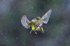 Dancing in the rain by Marco Redaelli