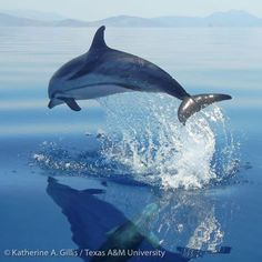 Dolphin Images, Public Health, Whales, Dolphins, Mammals, The Past, Wildlife, Survival, Around The Worlds