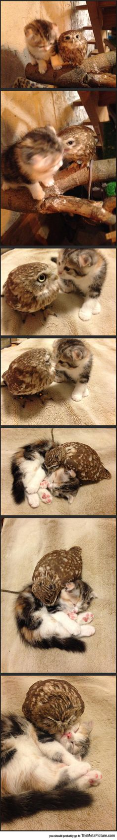 Kitten And Owlet - Can we all say , Aaahhhhhh?