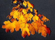 A Moment Of Fall by Lillian Molstad Andresen, via 500px