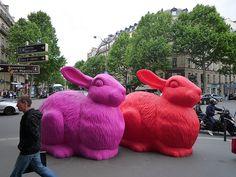 Lapins à Paris