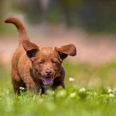 Scuola per cani: piccoli trucchi per educare il cucciolo