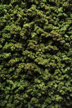 OverDoz overdose . microDoz. Green. grün grass..legal ' illegal...ckc...erorrrr