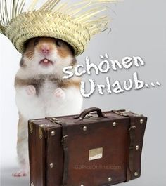 Urlaub Urlaub The post Urlaub appeared first on Urlaub. Happy Weekend Quotes, Happy Tuesday Quotes, Weekend Humor, Its Friday Quotes, Happy Quotes, Good Morning Quotes, Happy Friday, Funny Weekend, Funny Morning