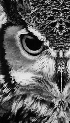 Inbox - Mail Inbox -Mail Inbox - Mail Inbox - Love the black and white photography Bengal Eagle Owl Beautiful Owl, Animals Beautiful, Cute Animals, Beautiful Places, Beautiful Pictures, Owl Photos, Owl Pictures, Realistic Owl Tattoo, Vogel Tattoo