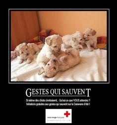 Croix-Rouge française - Gestes qui sauvent : si même des chiots s'entraînent... Qu'est ce que VOUS attendez ?  Initiations gratuites aux premiers secours sur la Caravane d'été de la Croix-Rouge française :   http://www.croix-rouge.fr/Actualite/Caravane-d-ete-2012/La-carte-de-la-Caravane-d-ete-2012-!-1459