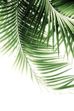 Palm Leaves Green Vibes Art Print by Anita's & Bella's Artwork - X-Small Tropical House Design, Tropical Home Decor, Tropical Interior, Tropical Colors, Tropical Houses, Tropical Leaves, Palm Leaf Wallpaper, Plant Wallpaper, Tropical Furniture