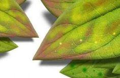 diagnostiquer symptomes des plantes