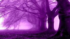 purple fantasy google landscape hd nature stuff land violet tree things sk sparad fran