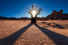 Twin Kokerboom Richtersveld National Park, Northern Cape, South Africa Photo by Mark Dumbleton Photography